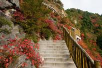 巫山红叶观光梯道
