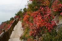 巫山红叶红似火