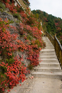 巫山红叶与观光步行梯道