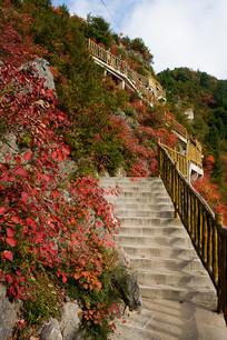 沿阶而上的巫山红叶观光梯道