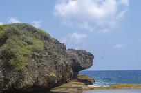 海边乌龟形状石头