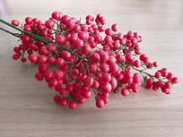 红红的小果