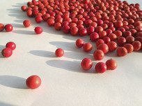 红红的小果素材