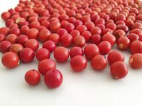 小果红豆静物