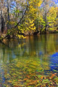 彩林之河摇曳的水草