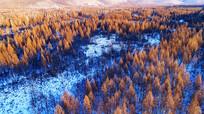 大兴安岭雪色松林
