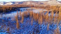 大兴安岭雪原松林