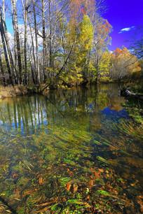 河流彩林水草景观