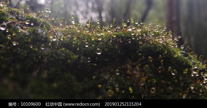 清晨草木图片