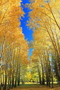 秋日树林灿烂的秋色