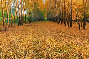 秋日树林小路落叶