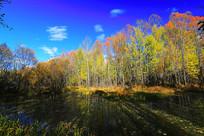 秋天的森林河