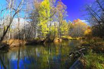 森林河五彩林