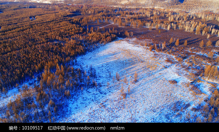 森林湿地雪景图片