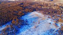 森林湿地雪景