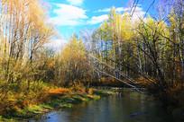 森林小溪彩林灿烂