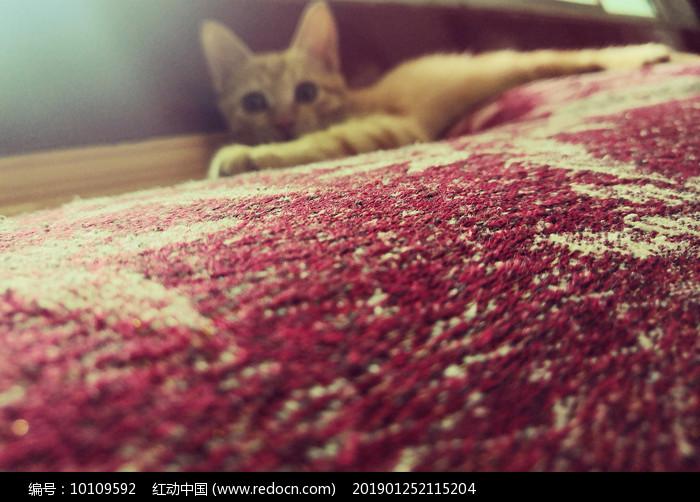 午后橘猫图片