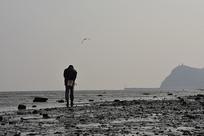 冬季海滩拿耙子捡蛤蜊的人