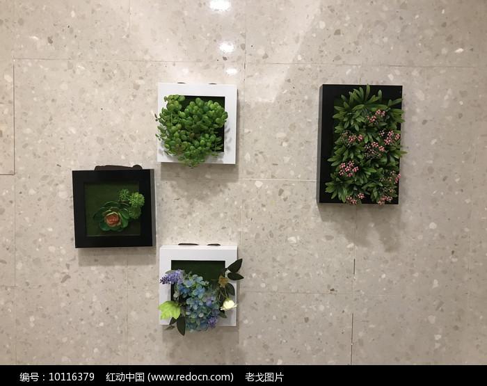 墙面绿植装饰图片