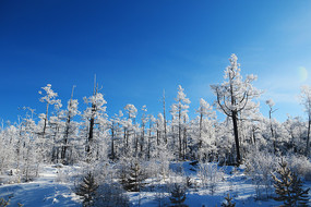 大兴安岭林海雪原景观