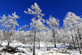 大兴安岭雪域树林