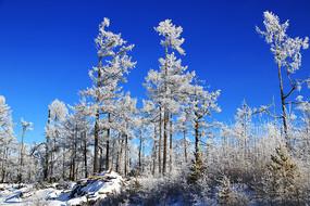 大兴安岭雪域树林景观