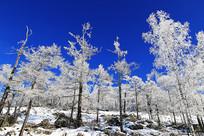 森林冬季冰雪风光