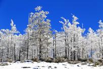 林海雪原雪林雾凇