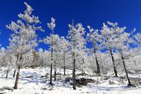 银色的树林