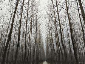 树林深处路