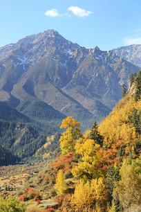 金色森林雪山下