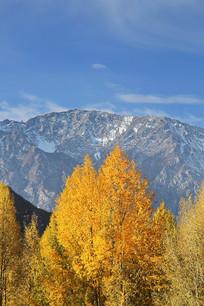 金色树林雪山背景下
