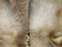 皮革皮草绒
