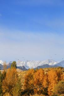 秋林雪山美景