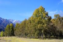 森林雪山美景