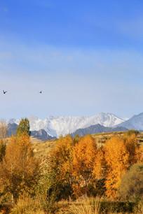 雪山秋林飞鸟