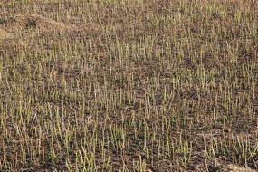 收割后的田地