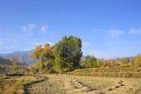田园风光绿树田地