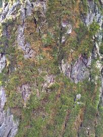 干裂自然树纹