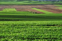 红绿相间草原