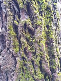 老树皮绿色