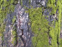 老树皮绿色特写