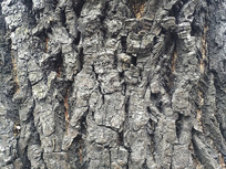 老树皮素材
