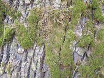 老树纹理苔藓