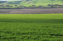新疆维吾尔自治区草原