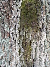 自然沧桑树纹