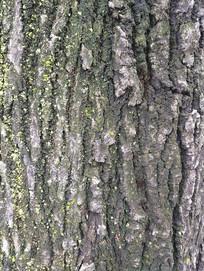 自然古树纹