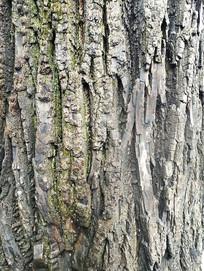 自然老树皮