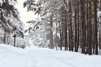 大自然森林雪景