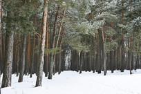 冬季森林大雪